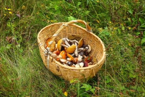 гриб, грибы, грибы в лукошке