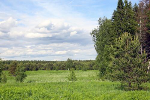 Рядом с Николо-Сольбинским женским монастырём находятся поля фитоспаса усеянные иван-чаем. Скачать фото Иван-чая хорошего качества.